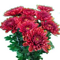 Shwe Hin Thar Flower 10pcs