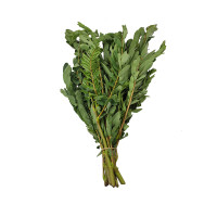 Sesbania Grandiflora 1pcs